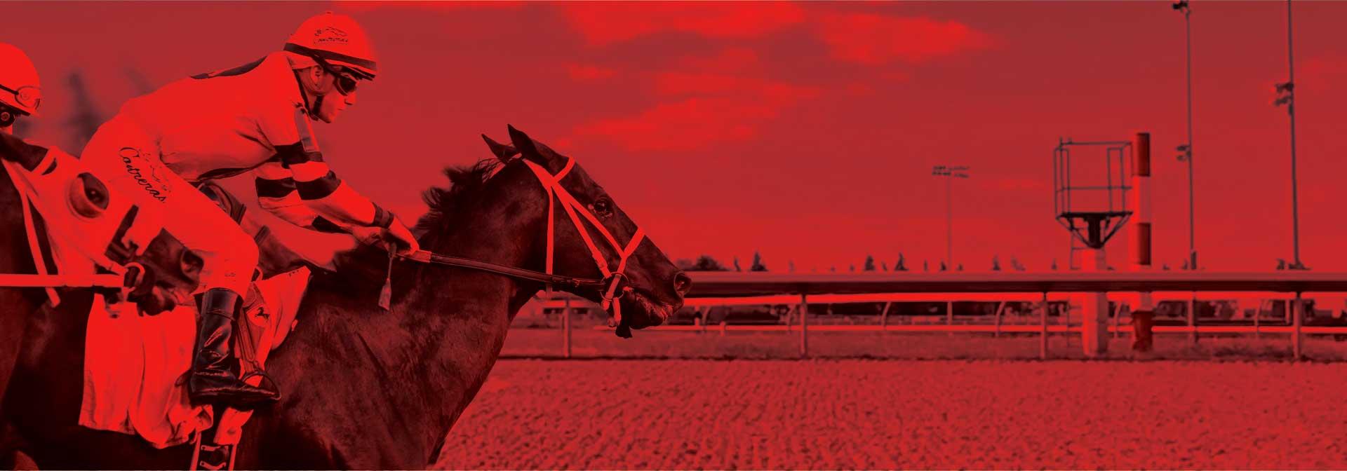 扣人心弦新体验,</br>尽在安省赛马!